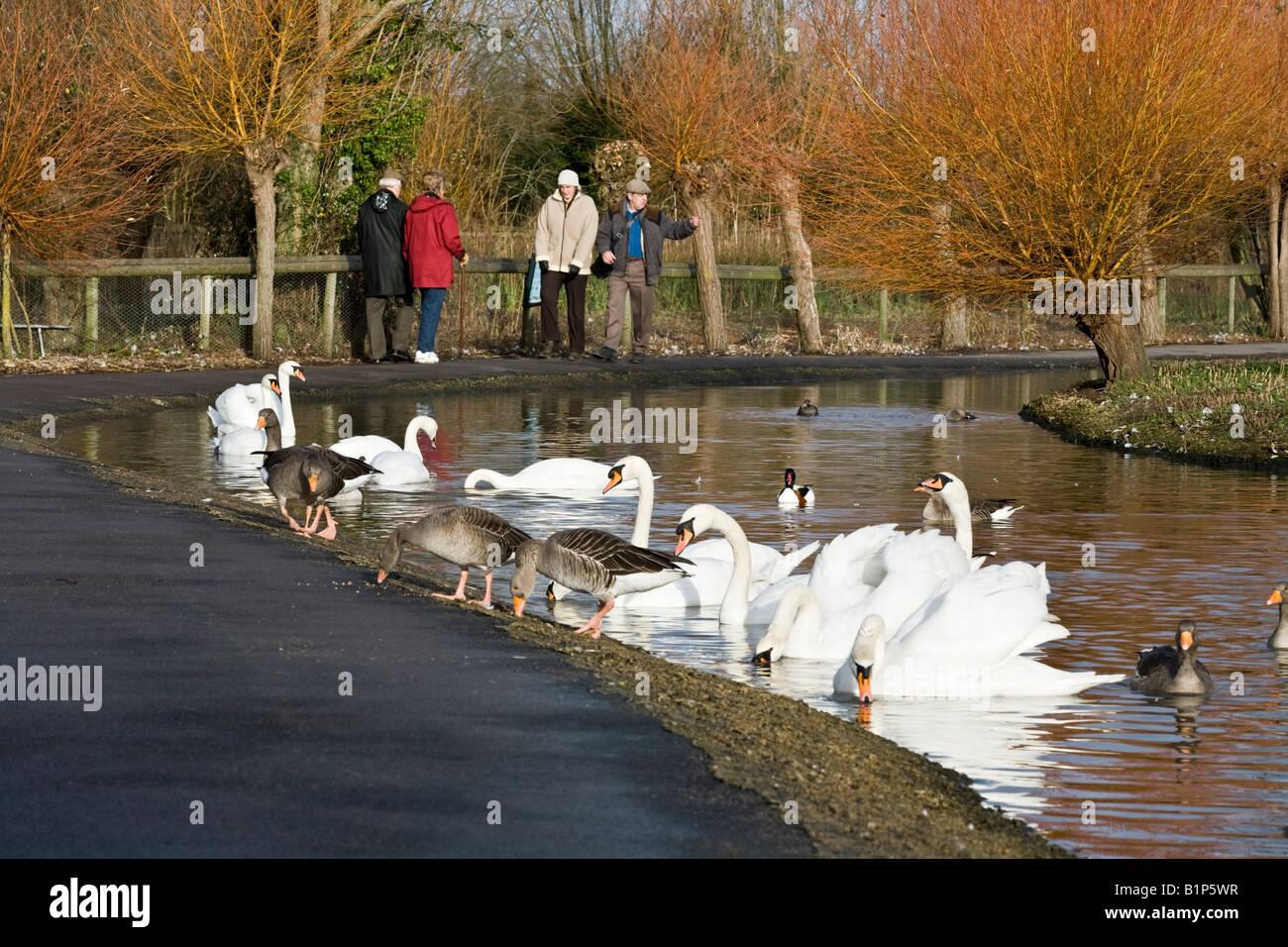 Visitors enjoying the winter sunshine at the Wildfowl & Wetlands Trust Slimbridge Wetland Centre, Gloucestershire - Stock Image