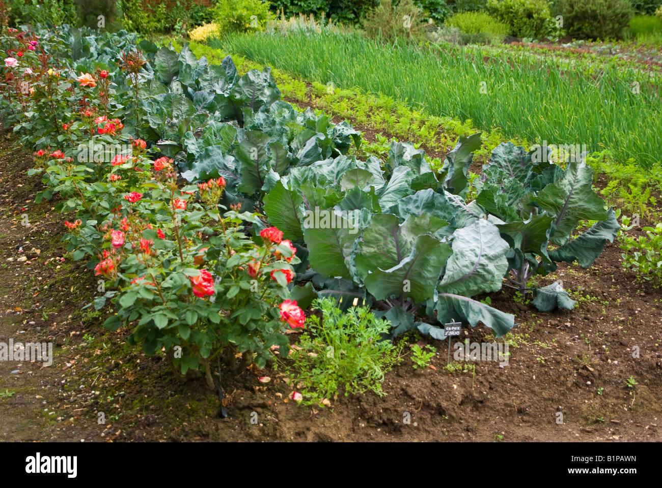 Rose bushes and rows of fresh vegetables in the garden at Chateau de Miromesnil in Normandy France EU - Stock Image