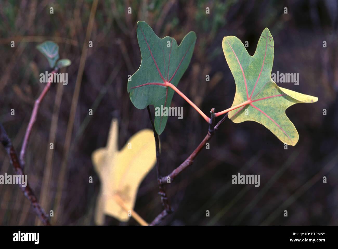 Plants - Stock Image