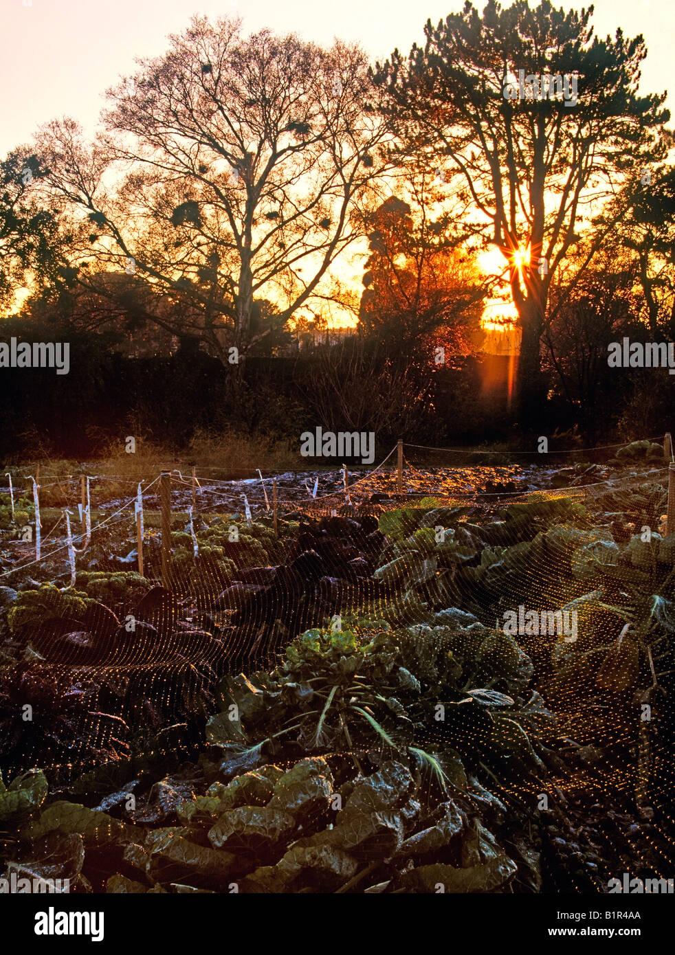 Vegetable Garden in Winter, National Botanic Gardens, Dublin ...
