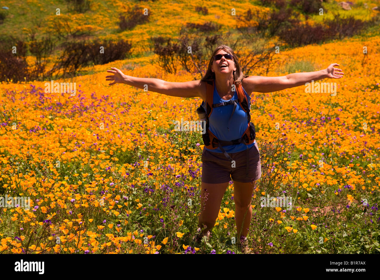 A hiker enjoying the wildflowers primarily California Poppy - Stock Image