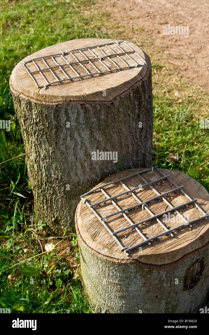 Wooden Mounting Blocks Uk Stock Photo 18336274 Alamy