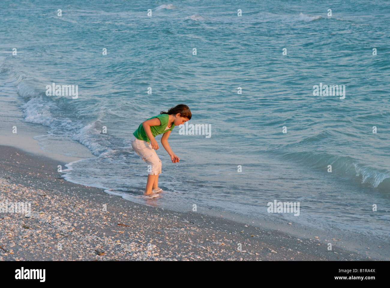 Young girl 9 10 years old collecting shells at water's edge Bowman's Beach Sanibel Island Florida at sunset - Stock Image