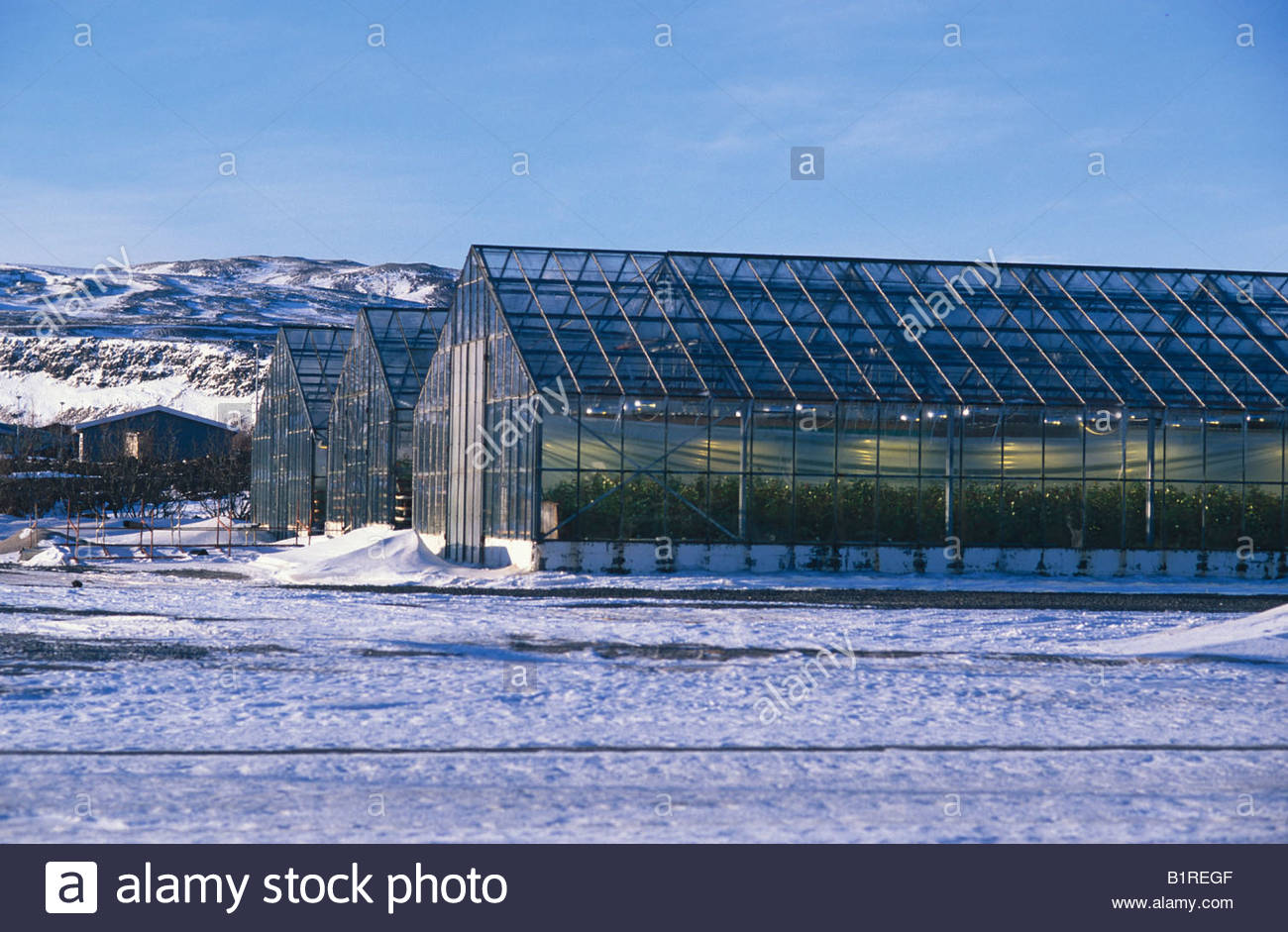 Greenhouses, Hveragerdi, Iceland, Europe - Stock Image