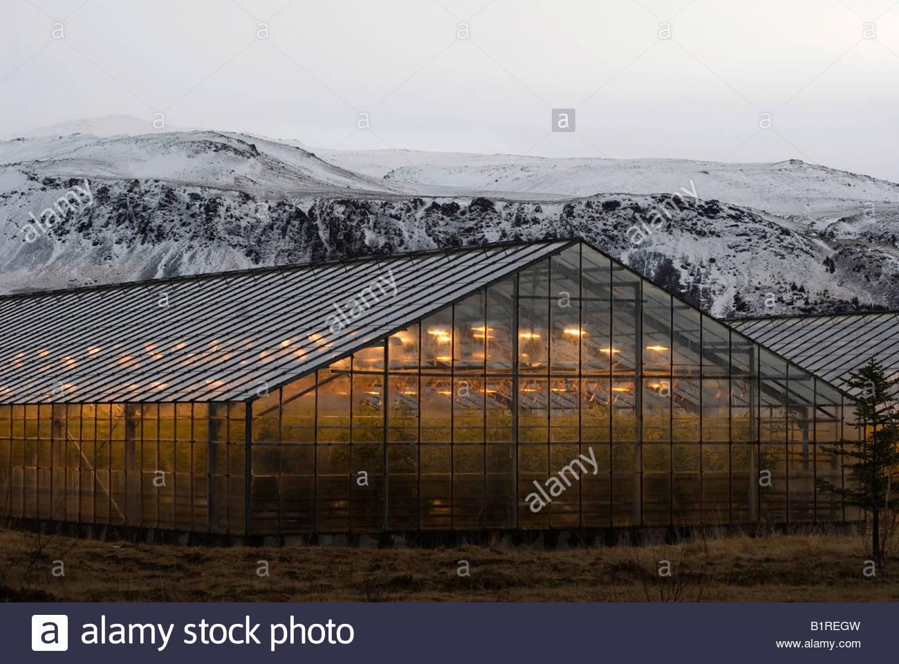 Greenhouses in Hveragerdi, local warm springs keep it heated, Iceland, Europe - Stock Image