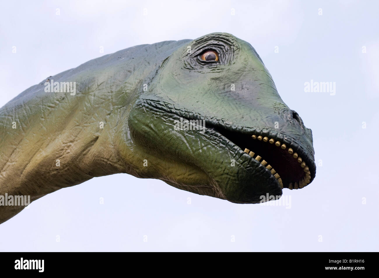 Diplodocus Longus, dinosaur in front of Senckenberg Museum, Frankfurt am Main, Hesse, Germany, Europe - Stock Image
