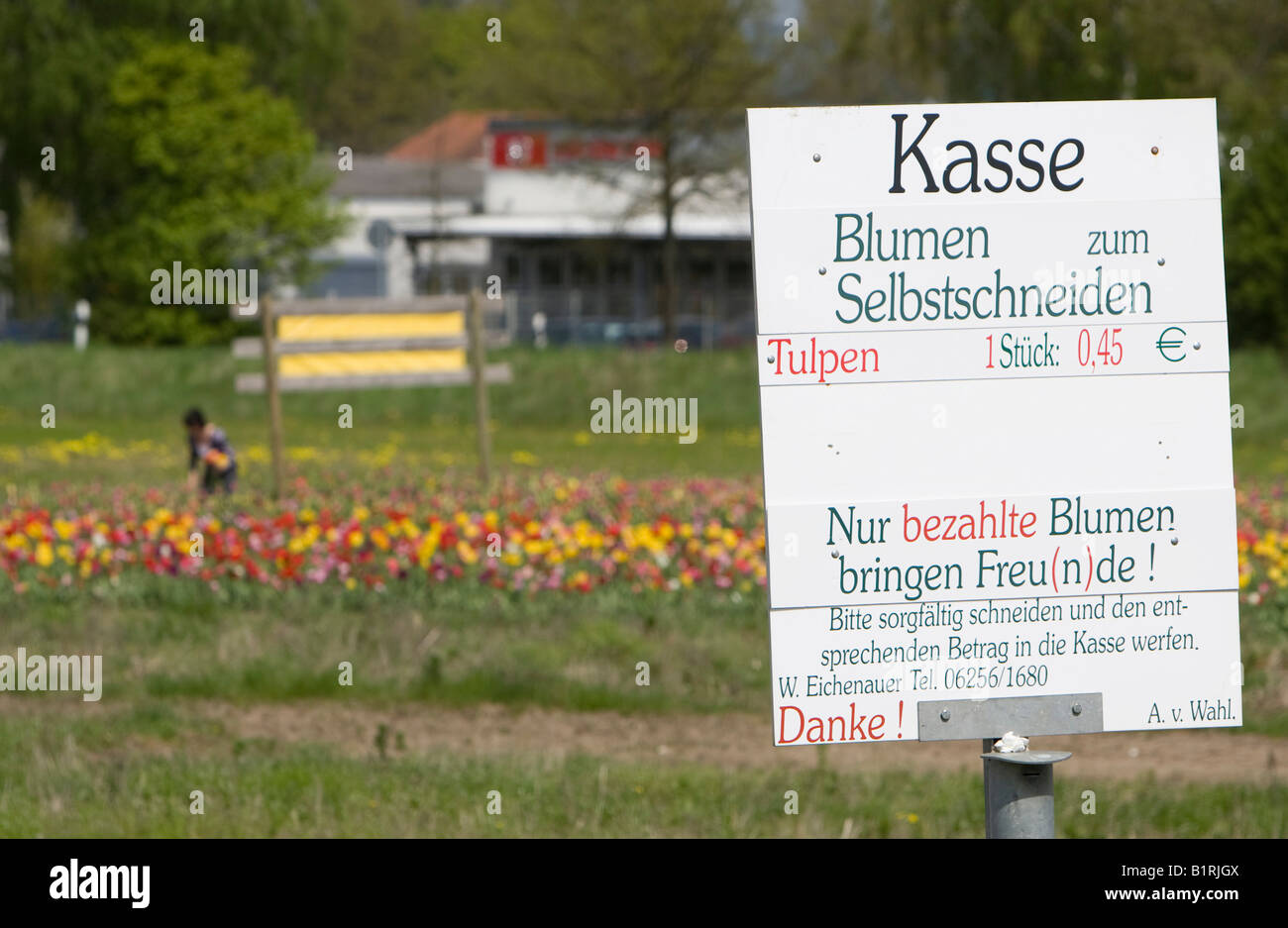 Sign reading Blumen selbst schneiden, pick flowers yourself, field of tulips, people holding flowers, Bergstrasse - Stock Image