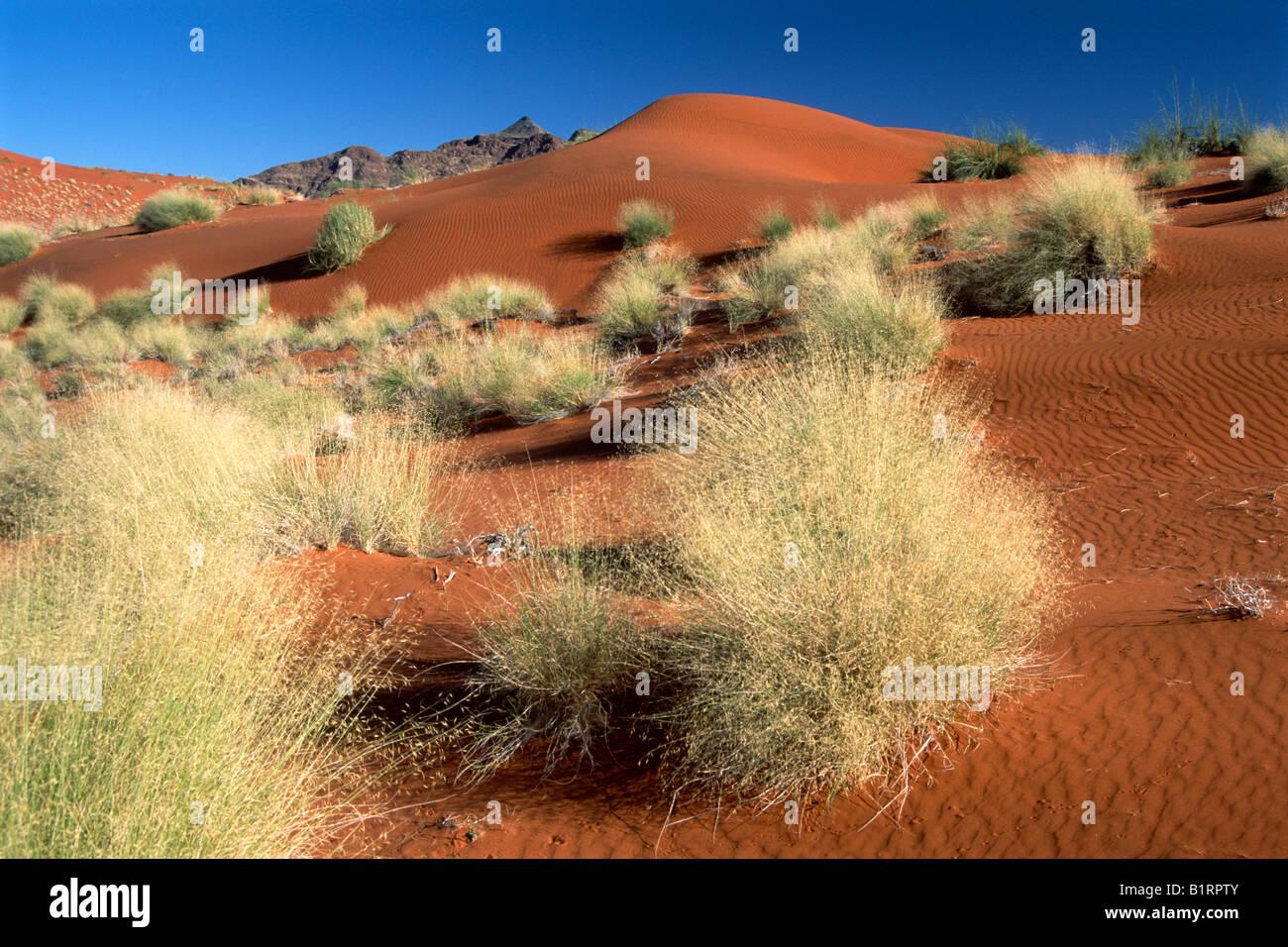 Dune landscape in the Namibian desert, Namib-Naukluft National Park, Namibia, Africa - Stock Image