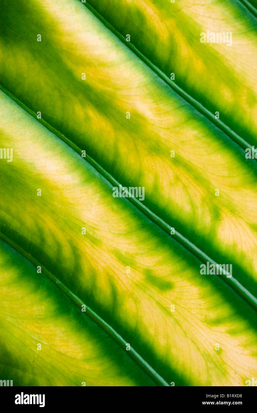 Leaf structure - Stock Image