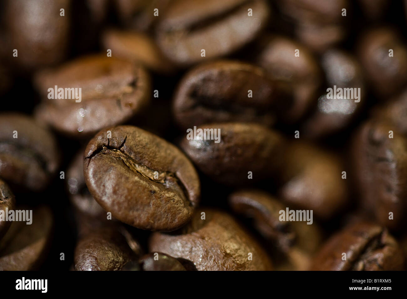 Coffee beans - Stock Image