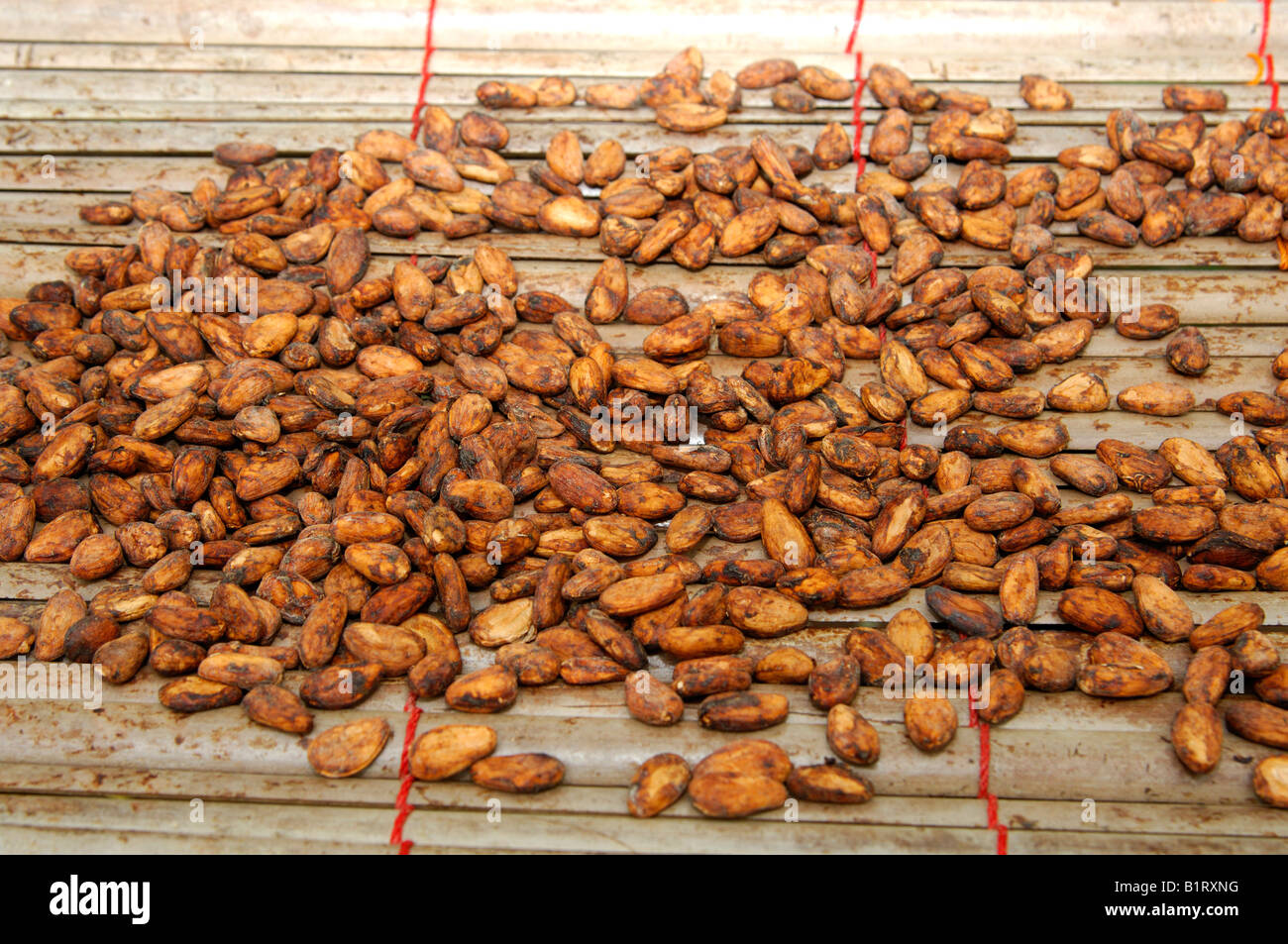 Fermented and dried cocoa beans (Theobroma cacao), Ghana, West Africa Stock Photo