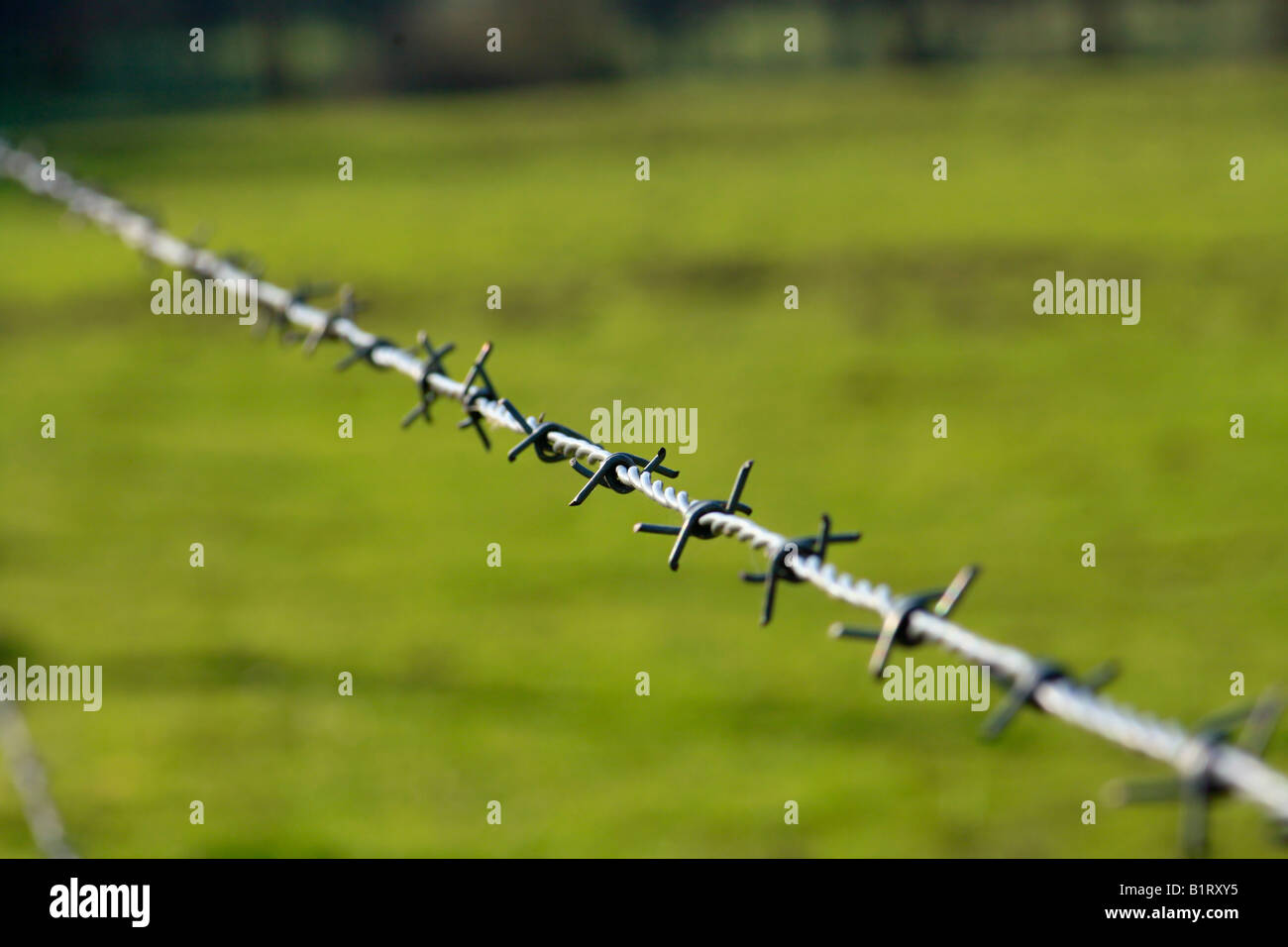 Barbedwire, barbwire - Stock Image