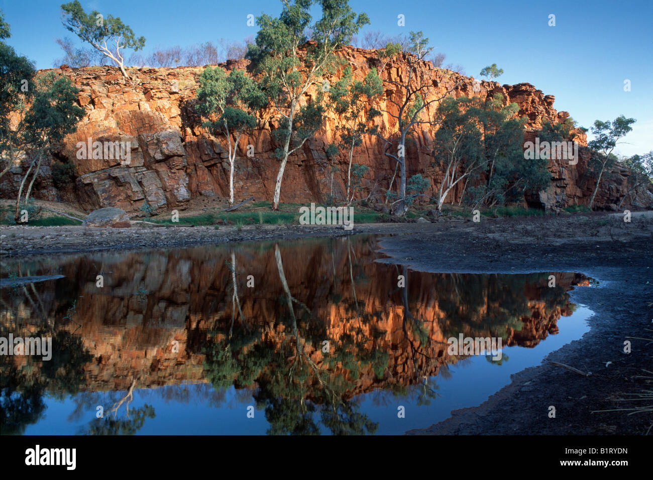 Ghost Gum (Eucalyptus papuana) and red rocks reflected, West Mac Donnells Ranges, Northern Territory, Australia - Stock Image
