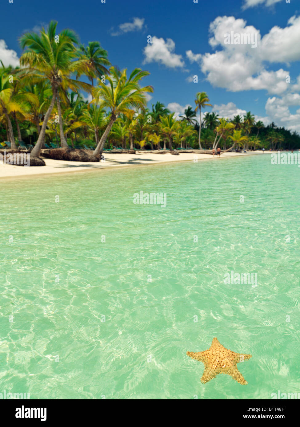 Dominican Republic Punta Cana Bavaro Beach,,starfish floating on placid water with blue sky and palm fringed beach - Stock Image