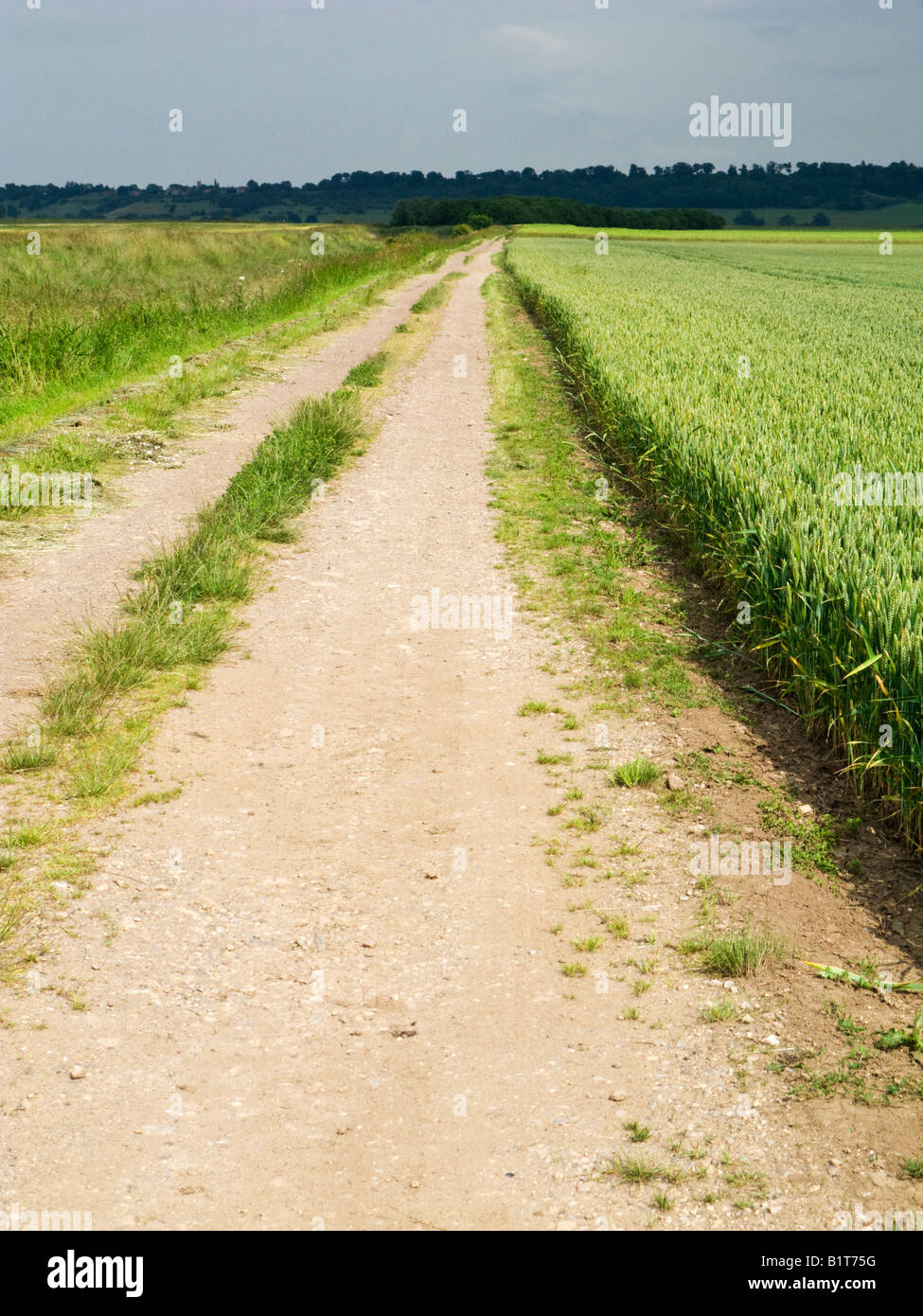 Pathway path through rural crop fields in the flat open landscape of East Yorkshire, England, UK - Stock Image