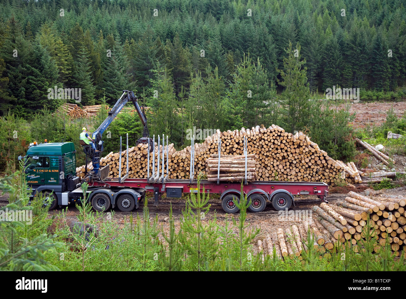 Harvesting Pine logs in Scottish Forest   Scottish Timber Industry   Harvesting Timber Invernesshire, Scotland uk Stock Photo