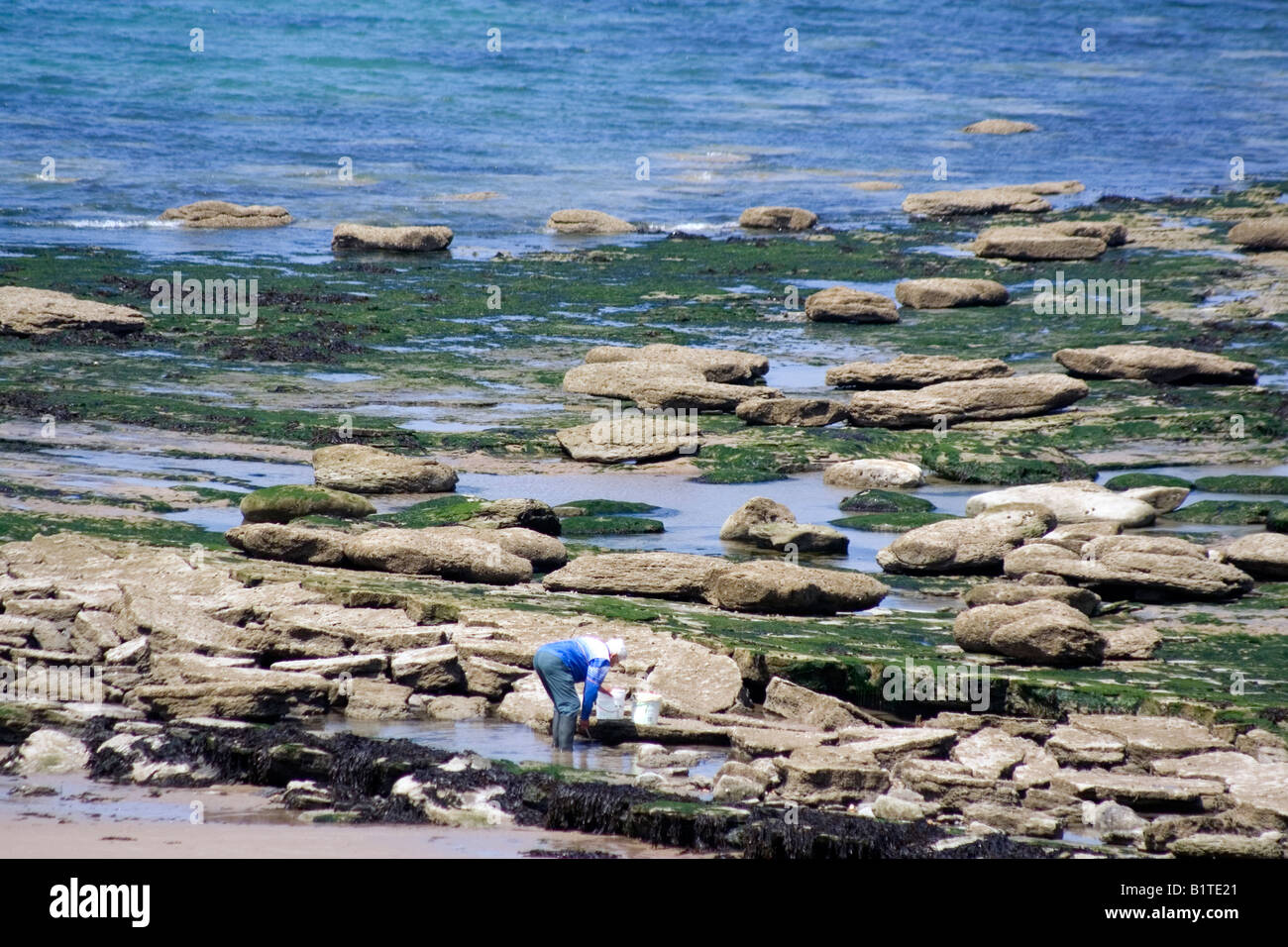 beach comber mussels worms English Channel La Manche pool Boulogne sur Mer France - Stock Image