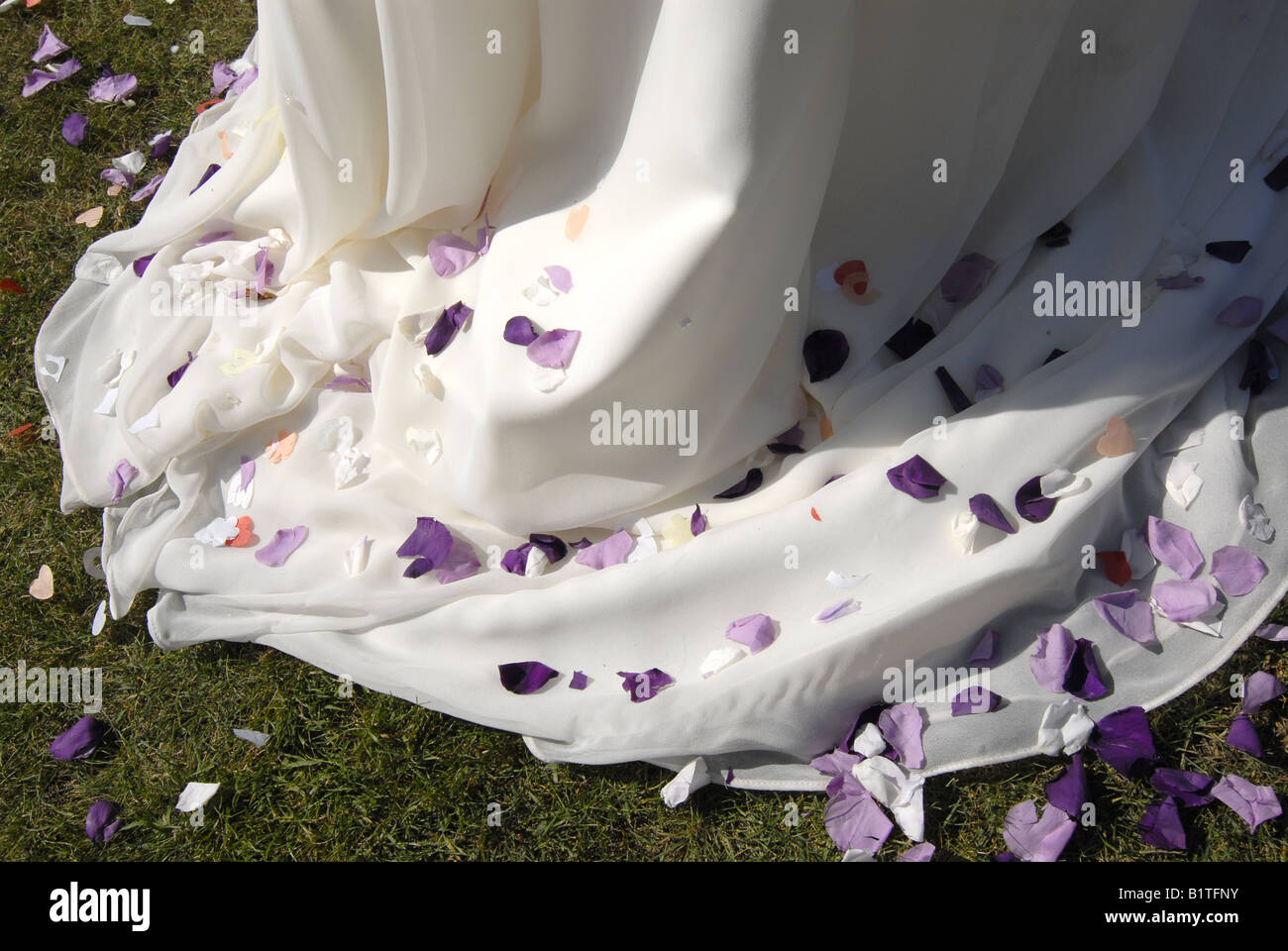 Rose petals and confetti on the train of a bride's dress on her wedding day. - Stock Image