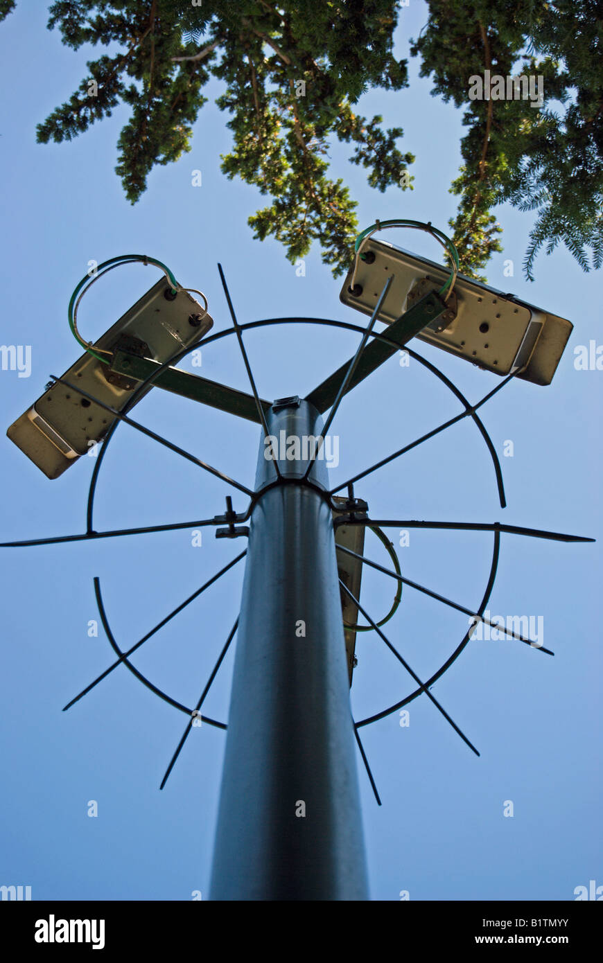 seen against a blue sky and the overhanging branches of a tree, three cctv cameras on a pole protected by a metal - Stock Image