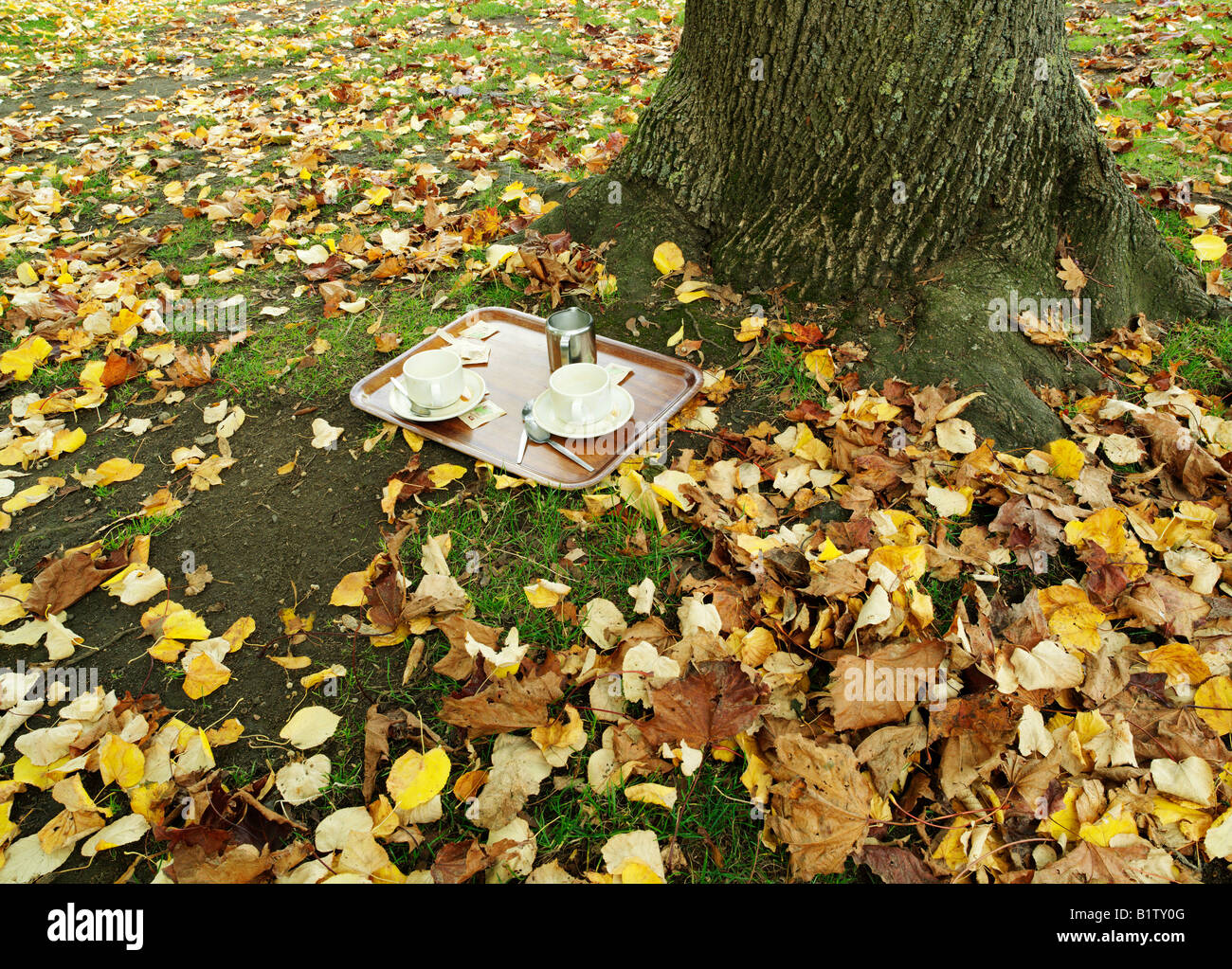 tray with tea cups abandoned under tree - Stock Image
