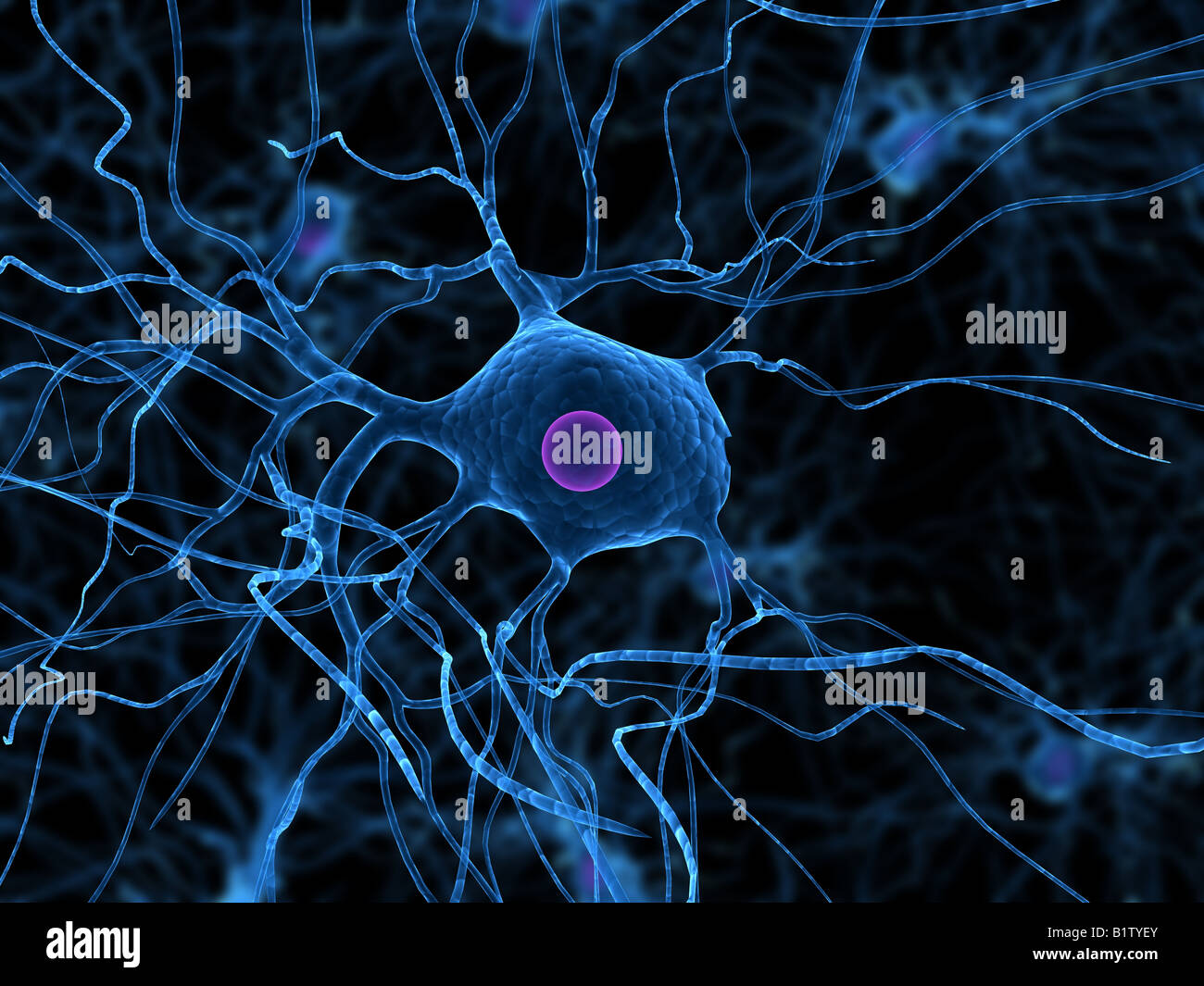nerve cell - Stock Image