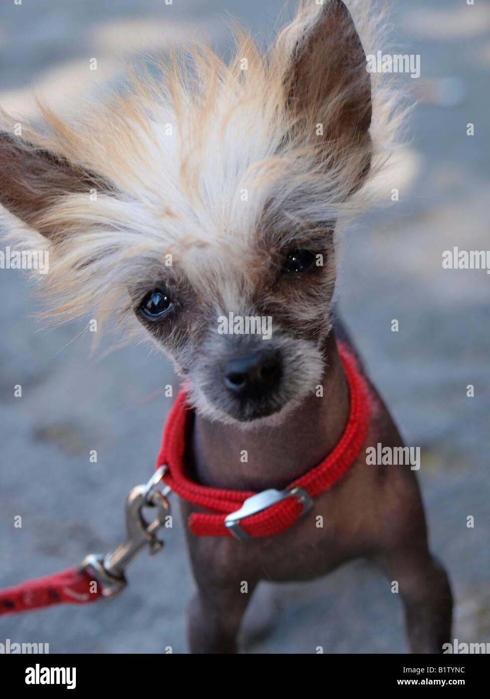 Cute Dog Haircut Stock Photos Cute Dog Haircut Stock Images Alamy