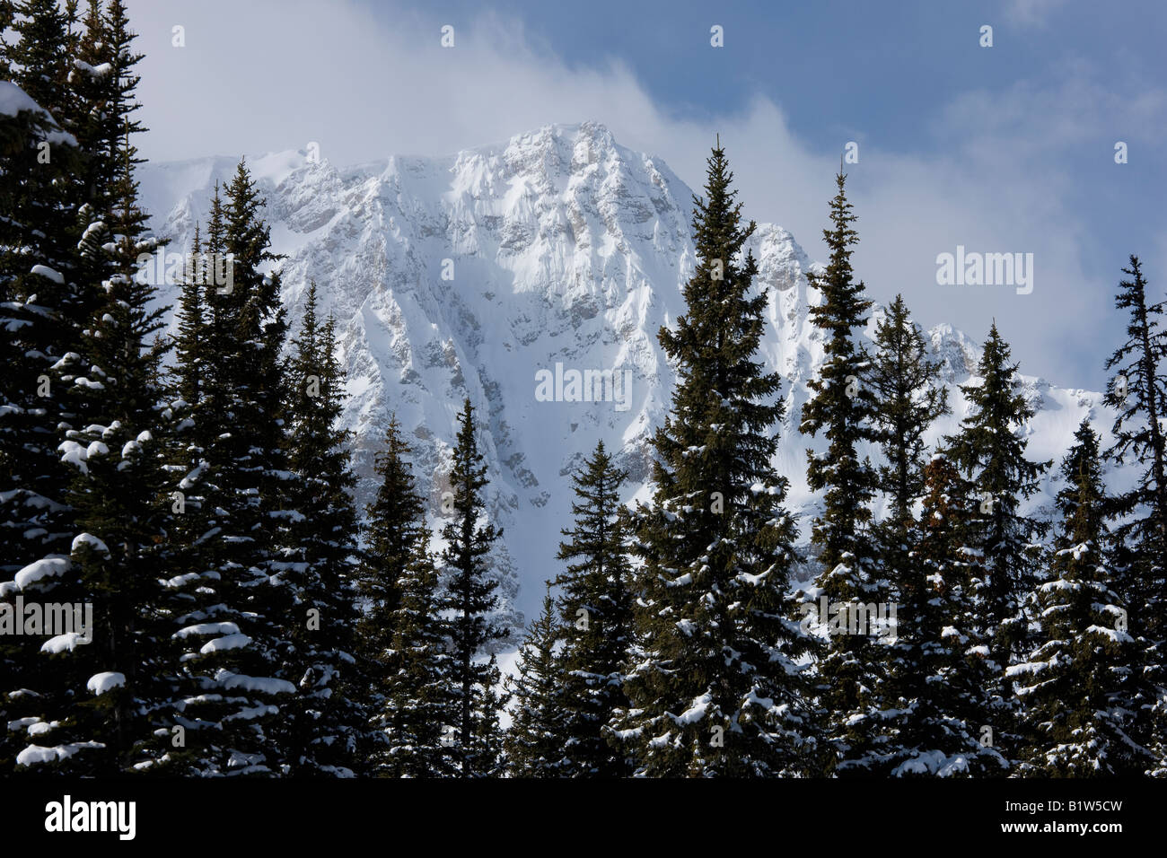 Canada Alberta Banff National Park Icefield parkway mountains viewed over pine trees - Stock Image