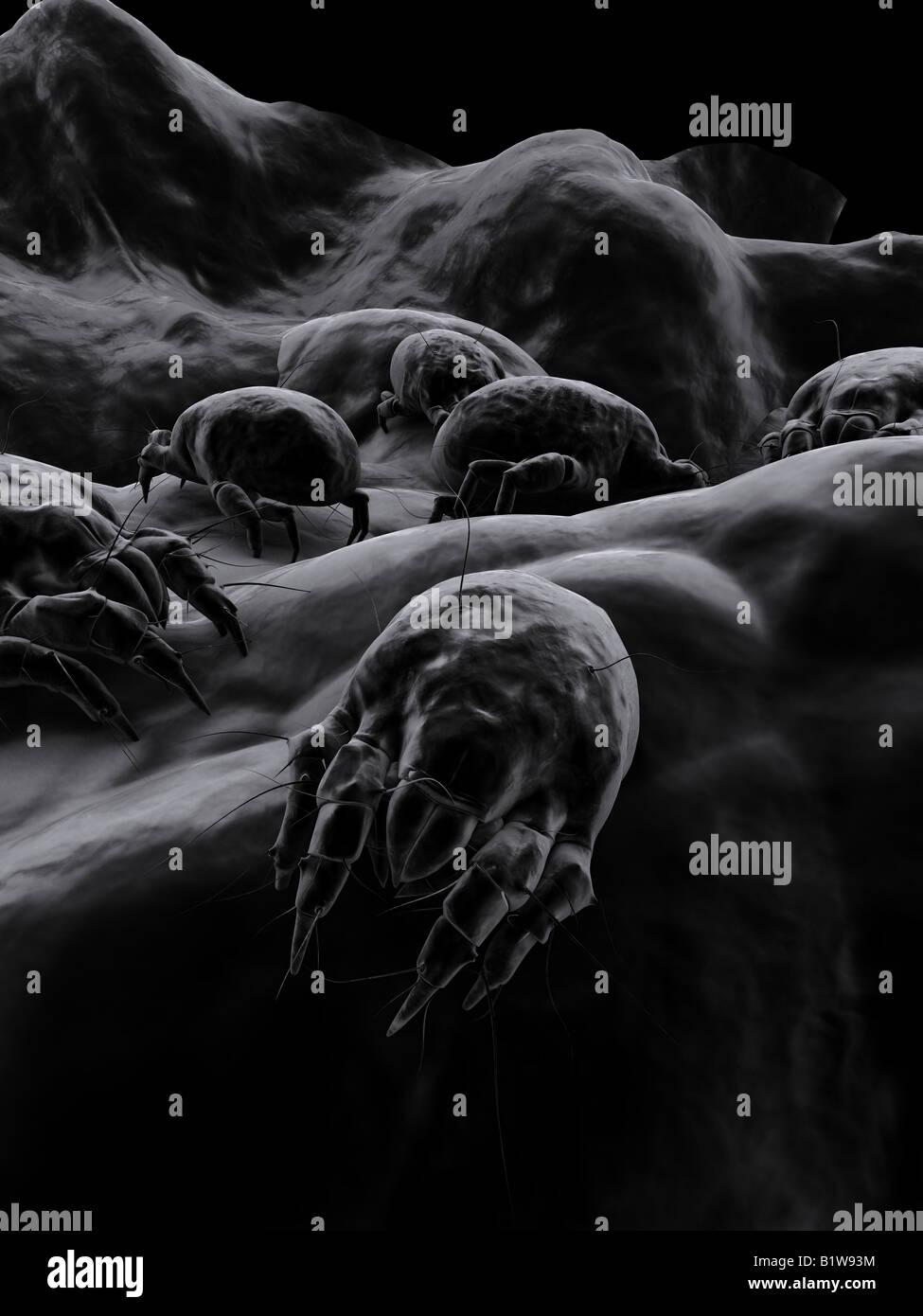 dust mites - Stock Image
