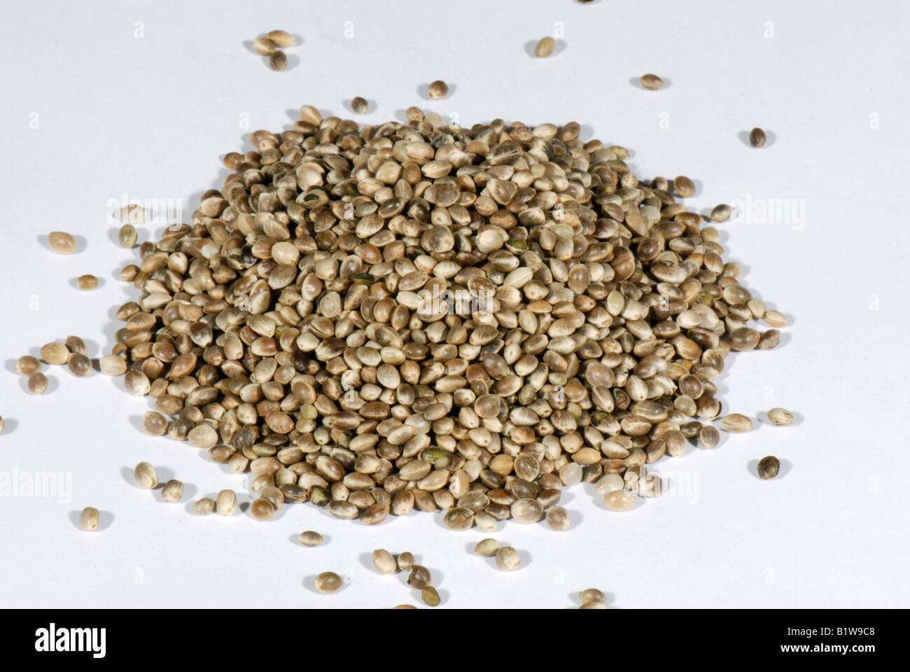 Organic hemp seed Cannabis sativa kitchen igredient sold in health food shops - Stock Image
