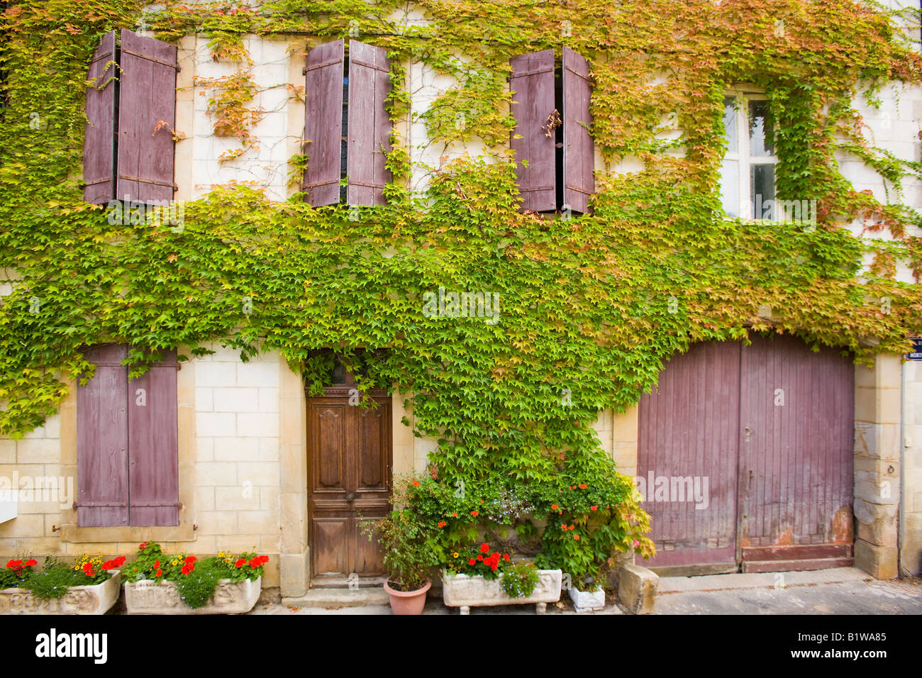 France Languedoc Roussillon Detail of house covered in virginia creeper - Stock Image
