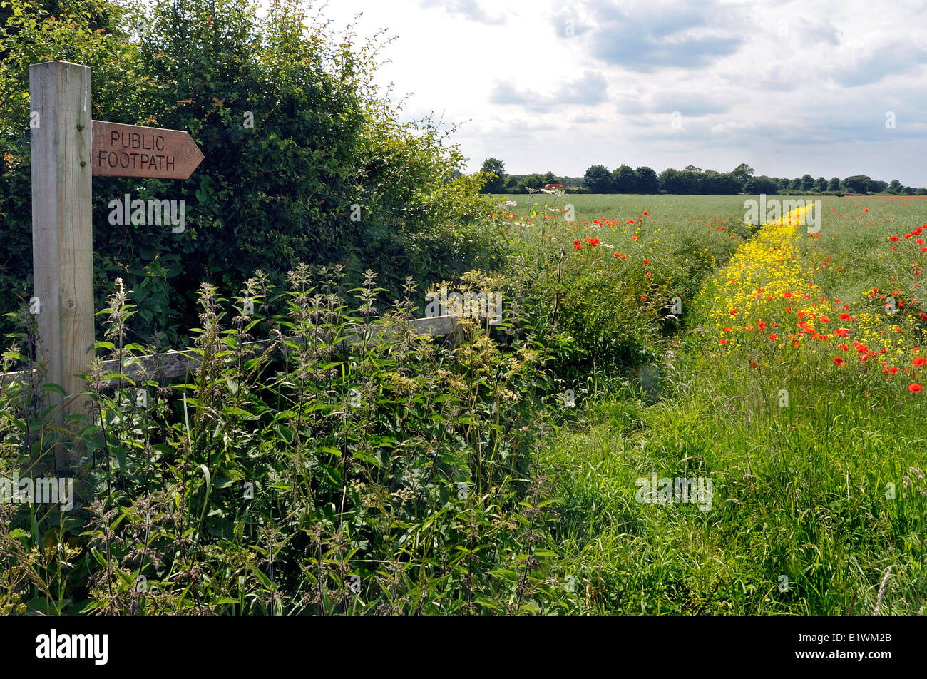 Colourful Public footpath, colourful wild flowers, hedgerow, - Stock Image