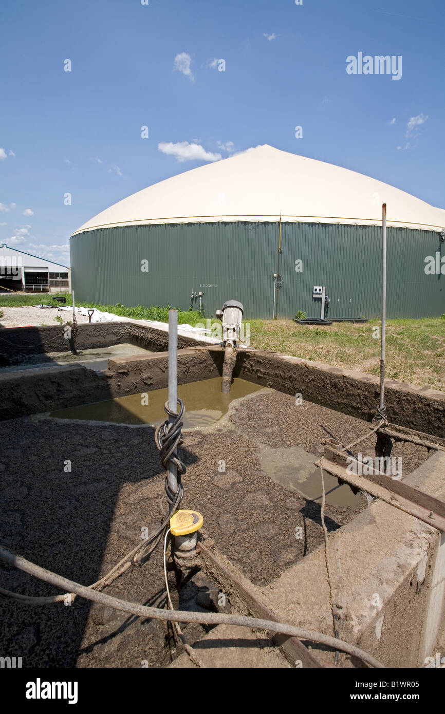 Cow Manure Is Collected to Extract Methane Gas to Produce