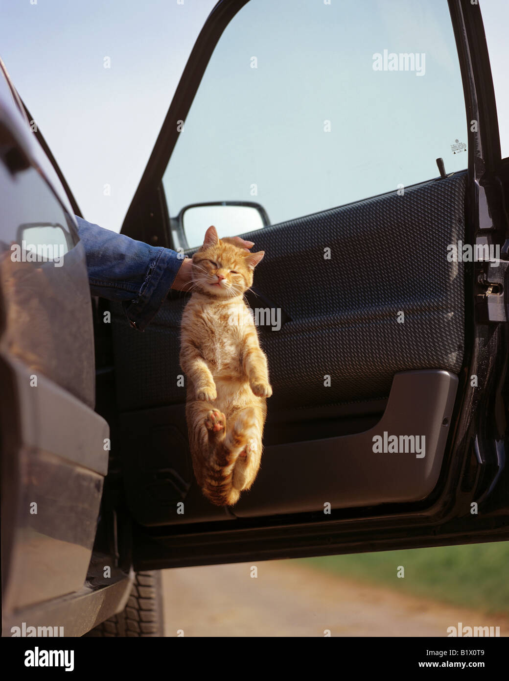 Abandoning A Cat Stock Photo 18396457