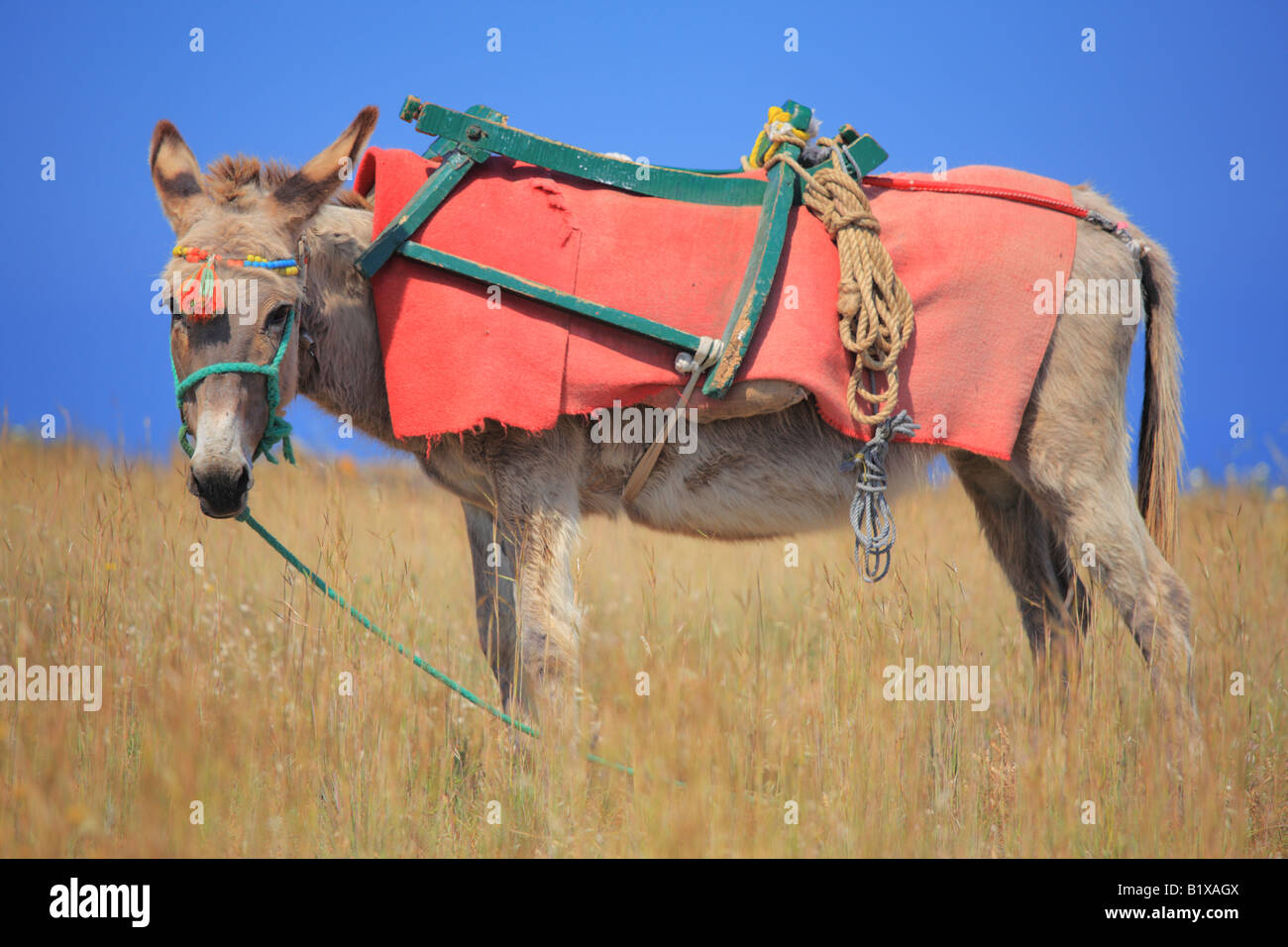 Donkey on Santorini island Stock Photo