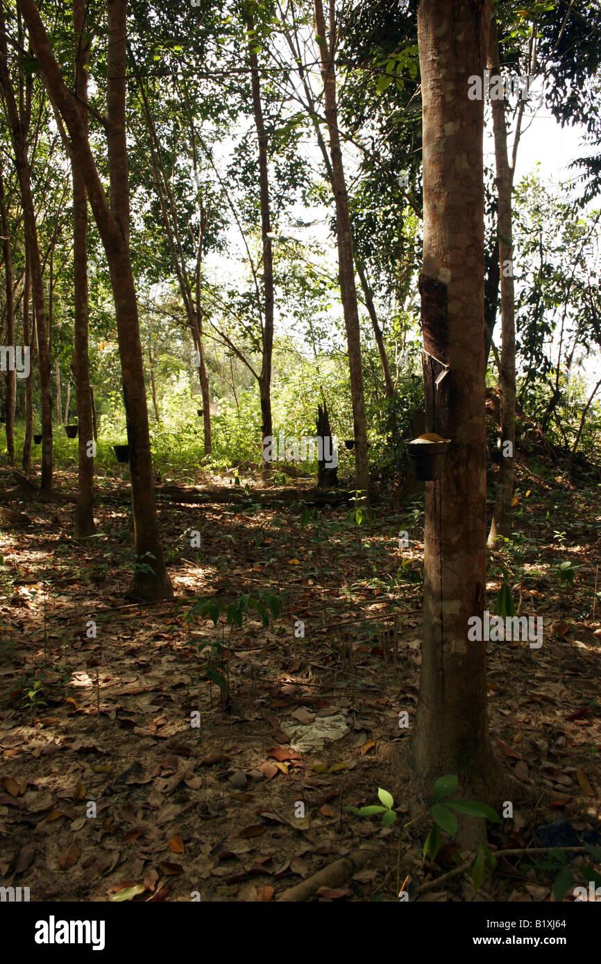 Rubber plantation in malaysia pdf