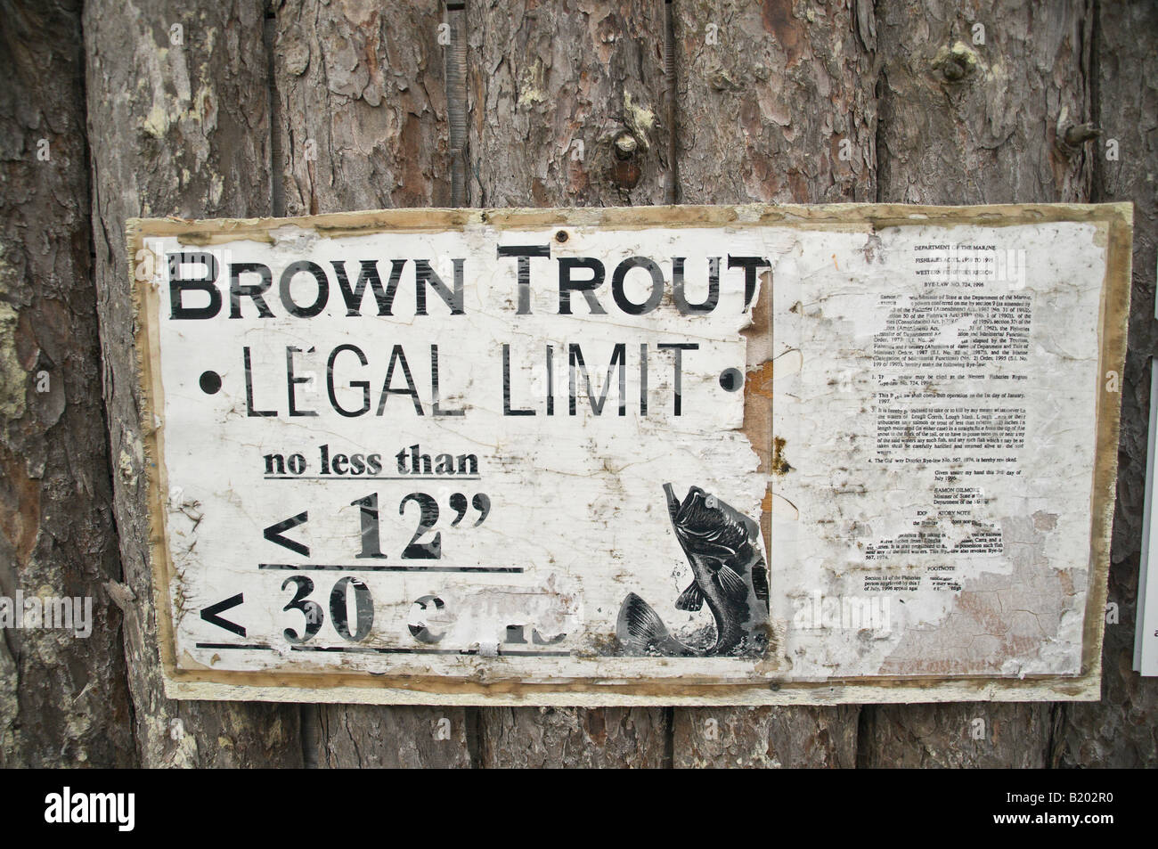 Sign showing legal limit for brown trout - Stock Image