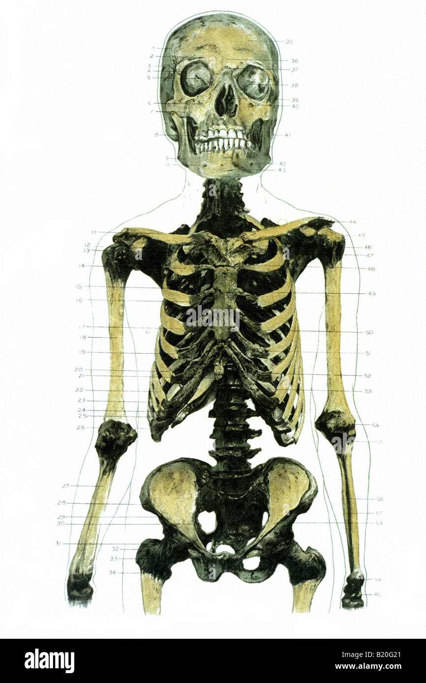 Male Chest Bones Stock Photos Male Chest Bones Stock Images Alamy