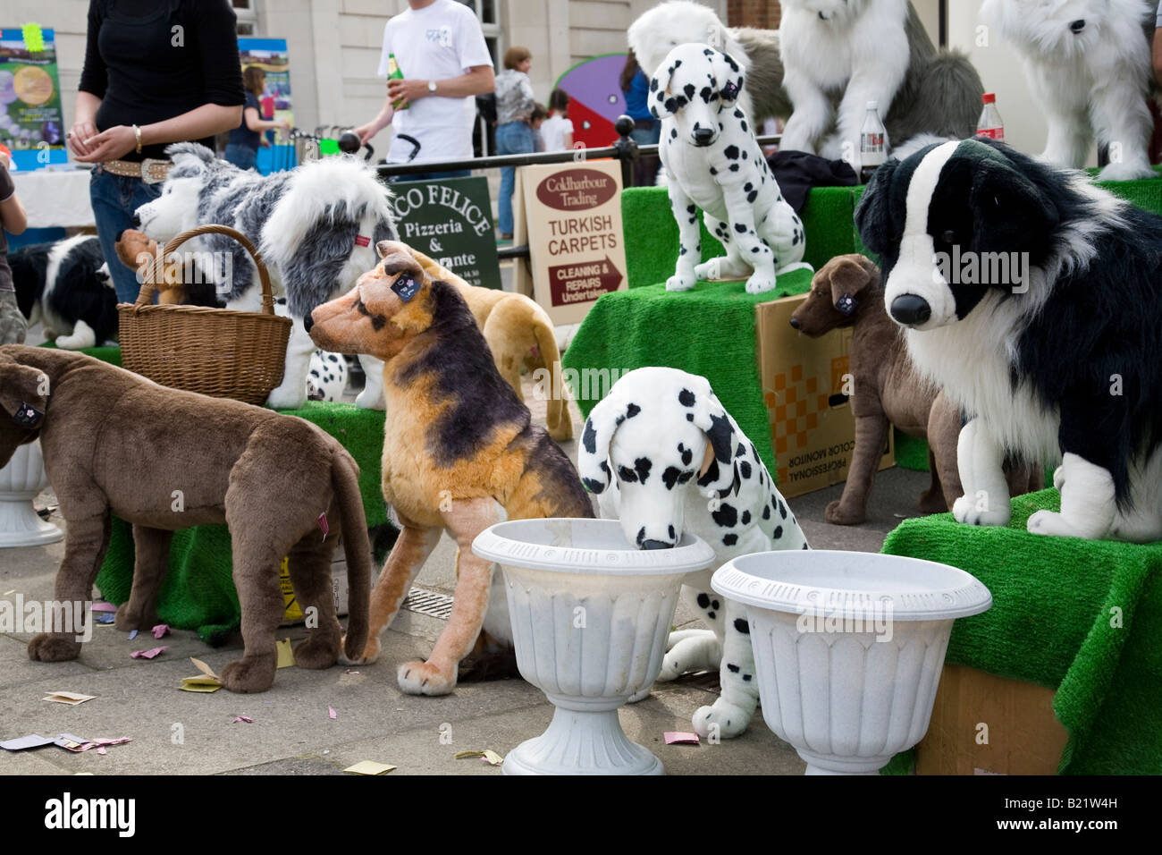 Search Dogs For Sale
