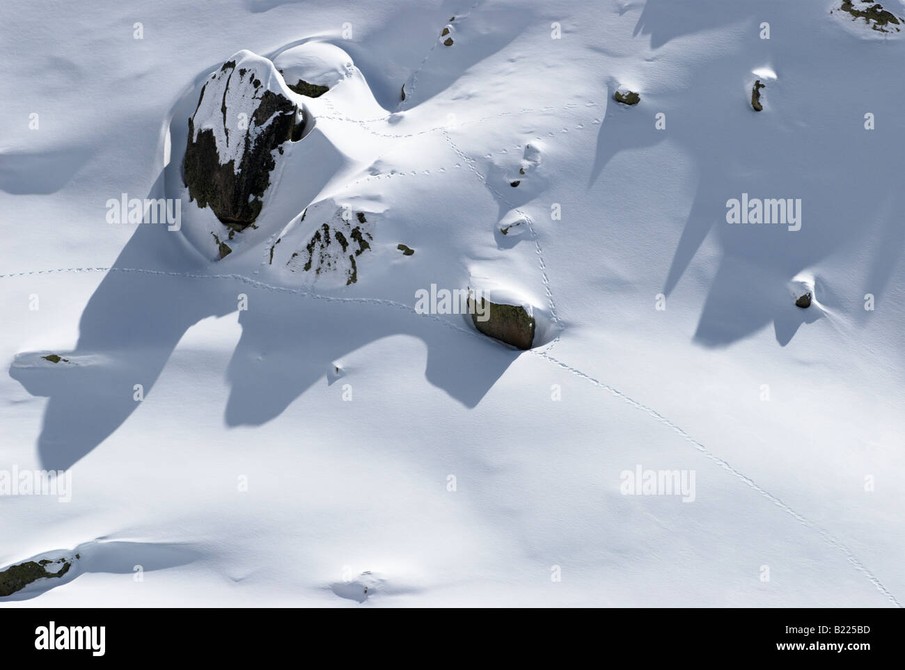 Animal tracks in fresh nicely textured snow surface - Stock Image