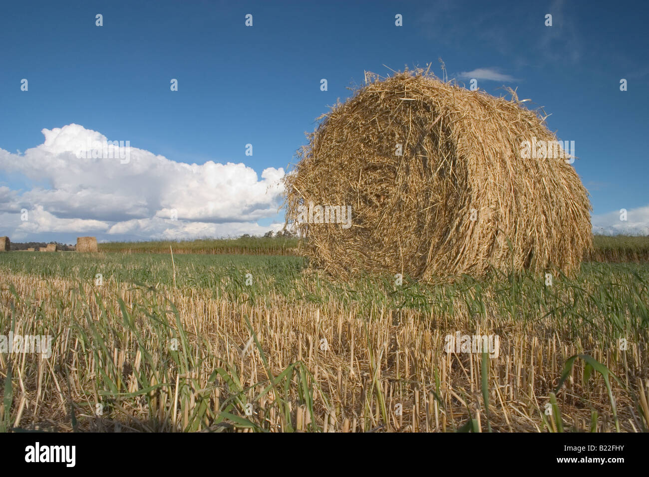Round Haystack - Stock Image