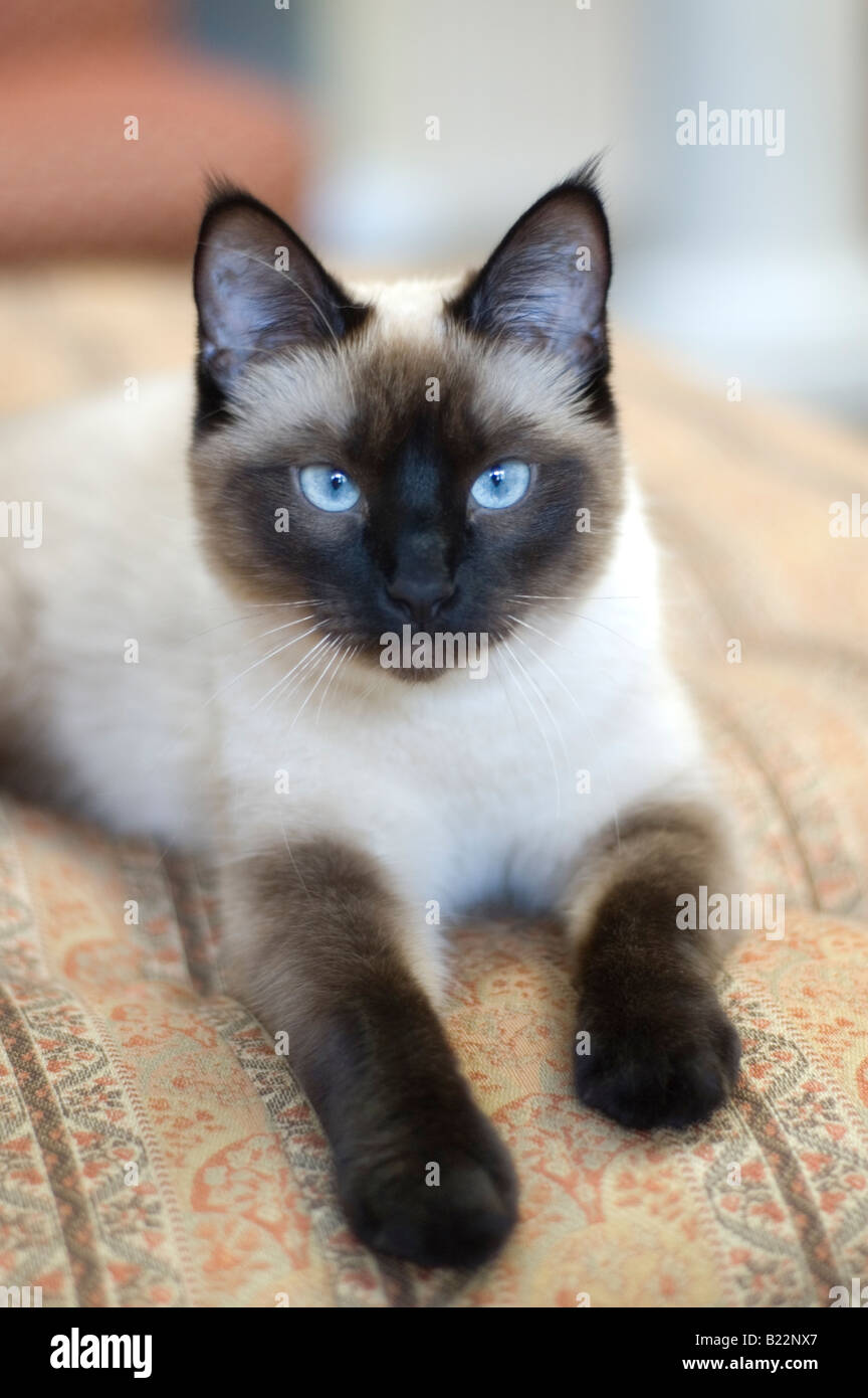 Cats For Sale In Colorado