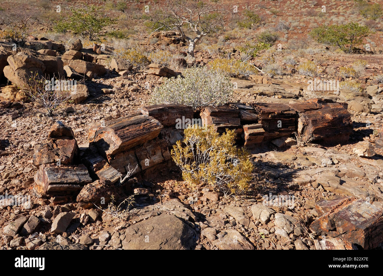 PETRIFIED FOREST near Twyfelfontein, petrified tree, Namibia, Africa - Stock Image