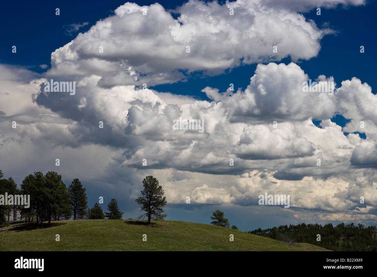 Cumulus clouds over Custer State Park South Dakota USA, by Willard Clay/Dembinsky Photo Assoc - Stock Image