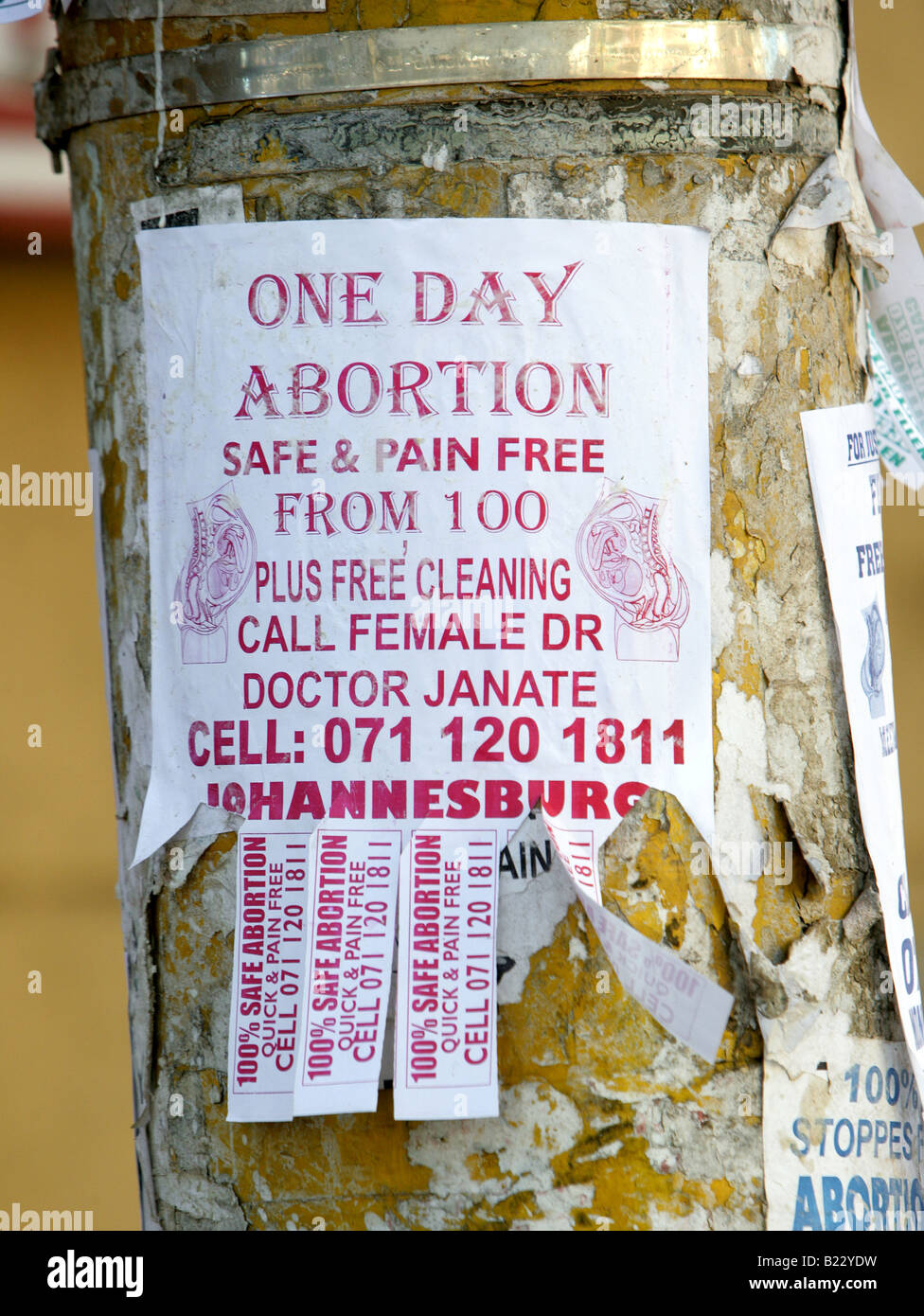 South Africa: leaflet on a tree in Johannesburg promoting reasonable abortion from 100 RAND (approximately 9,00 - Stock Image
