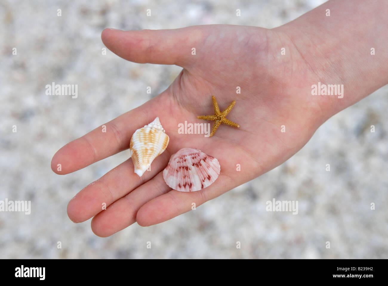 Child holding shells and 'sea star' on a beach Sanibel Island Florida - Stock Image
