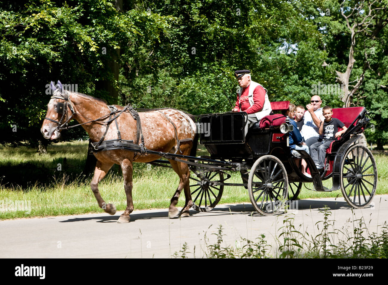 Sightseeing in a Hackney carriage in the danish park Dyrehaven - Stock Image