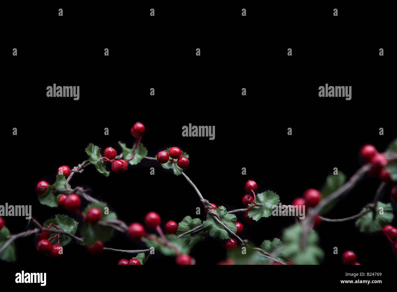 Holly - Stock Image