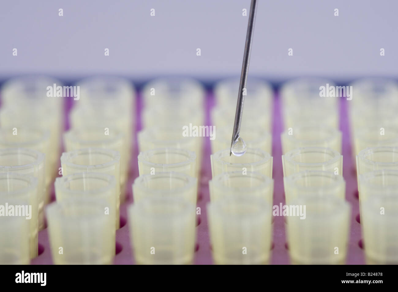 Syringe placing a droplet of liquid in test tube - Stock Image