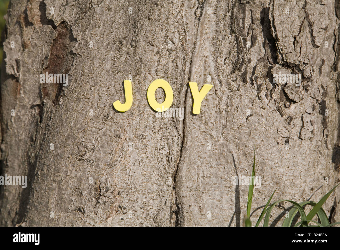 The word joy on a tree trunk - Stock Image