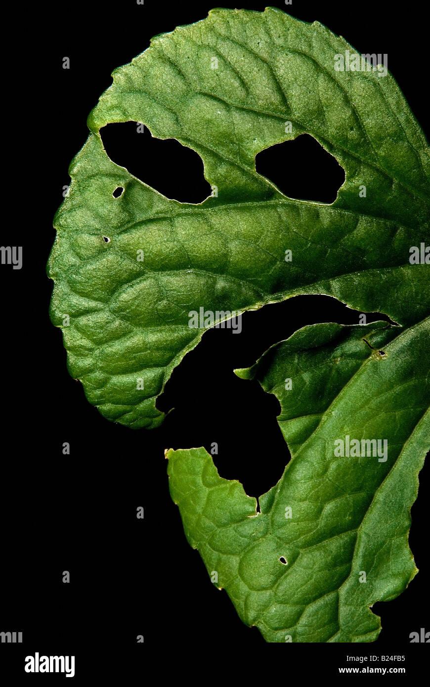 Diseased leaf - Stock Image